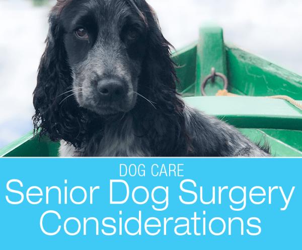 Should I Choose Surgery for My Senior Dog?