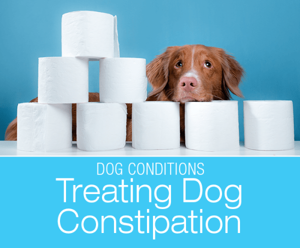 Treating Dog Constipation at Home: Can You Help Your Constipated Dog?