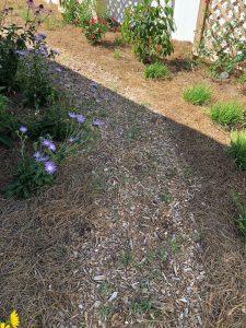 Garden Pathway Weeds