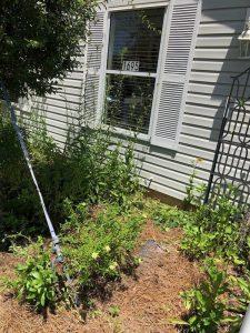 Front Garden Plants Growing