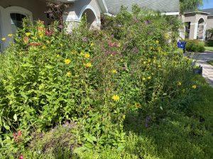 Front Garden Blooming