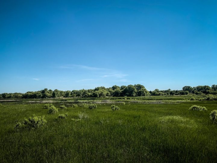Forests nearby the Salt Plains