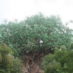 Tiggerific Tuesday Trivia – The Tree of Life!