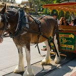 11 Days til Disneyland – Main Street Vehicles!