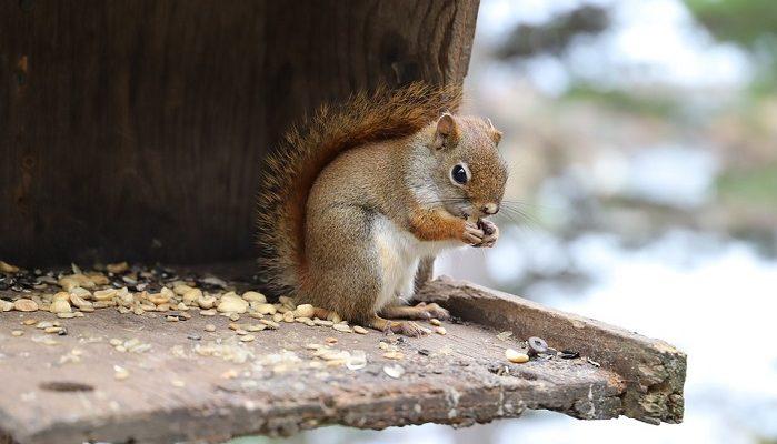 squirrel spirit animal totem