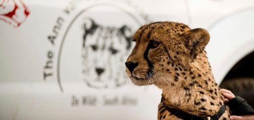 Nissan South Africa sponsors karting day to raise funds for cheetah preservation