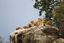lionfam