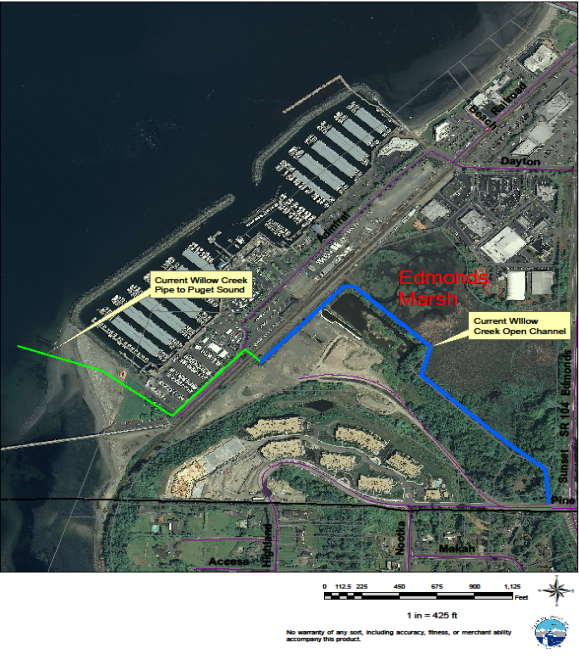 The marsh connection to salmon is Willow Creek, shown on the map at left as a blue line traveling through the Edmonds Marsh. The creek then enters a 1,600-foot pipe (shown as a green line on the map) where it goes under the railroad tracks, under the marina parking lot, under the beach, and into Puget Sound.
