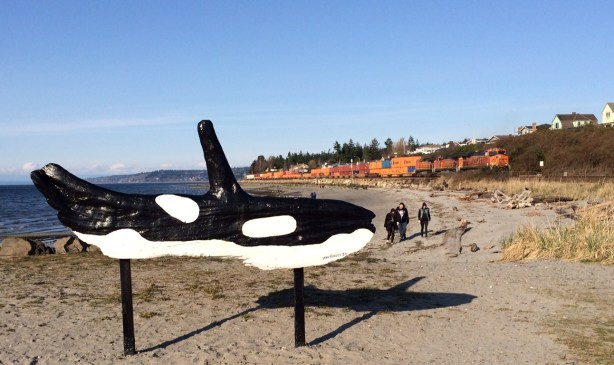 As the train passes by, beach walkers head toward the orca whale sculpture at Brackett's Landing.
