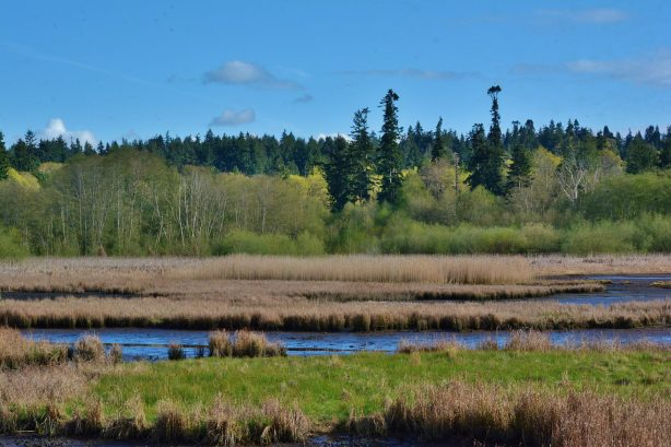 From Dan Palmer, the Edmonds Marsh on Friday.
