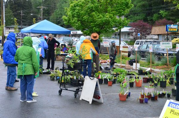 "The annual Edmonds Floretum Garden Club plant sale was a popular destination Saturday morning, and the early birds got the best pick. ""We had this place packed with plants when we opened at 9 a.m."" said Barbara Chase, plant sale organizer. ""One person bought more than $100 worth! By 10 a.m. most were gone."" The sale benefits Floretum scholarships to college students studying horticulture."