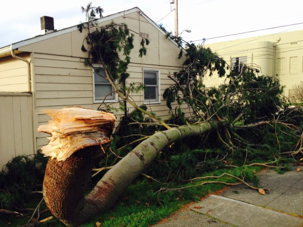 More windstorm damage, captured by Emily Hill at the  southwest corner of 6th and Daley Friday.