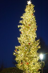 The Edmonds tree in its fully-lit glory. (Photo by David Carlos(