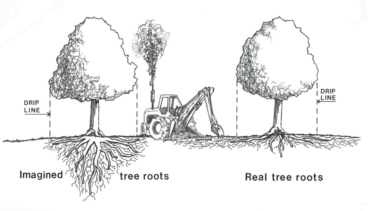 Princess Of Pruning Explodes Common Tree Care Myths