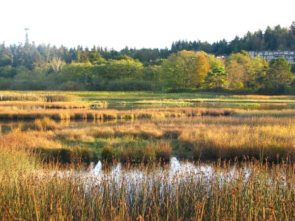 The Edmonds Marsh (Photo by William Keppler)