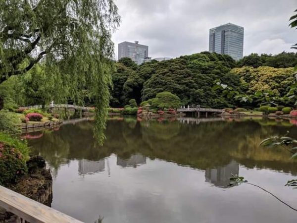 1e5cc85dcb1 A view of a pond at the traditional Japanese garden inside Shinjuku Gyoen.  The city s skyscrapers are always in view.