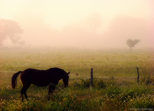 Horse and Fog by Claudio Ar