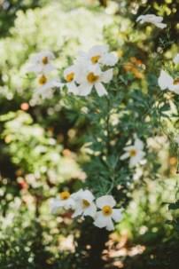 Megan and Patrick - Backyard Boho Wedding-16