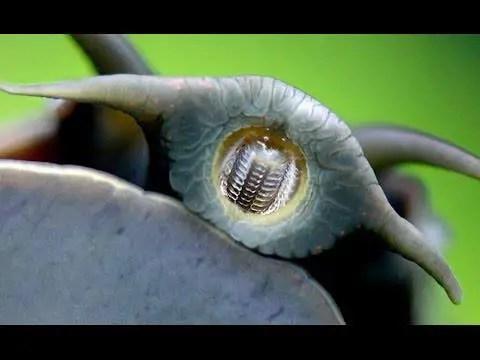 snail teeth