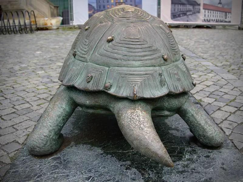 tortugas pueden respirar por el culo