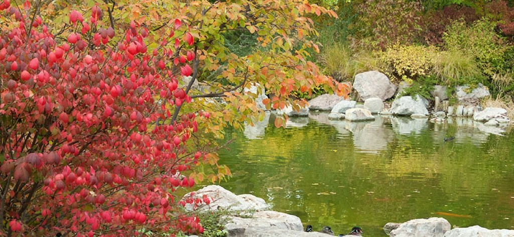 See fall foliage at Albuquerque's BioPark