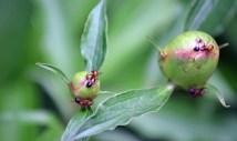 Ants02