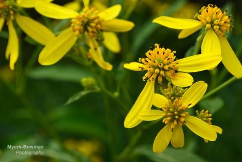 Flower03