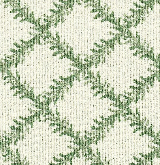 Evergreen on White