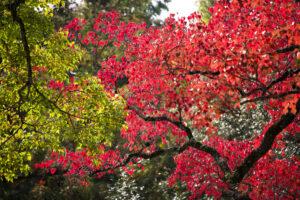 Autumn leaf season change