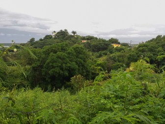 The view from the house. While it seems like mostly vegetation, there are quite a few homes in there.