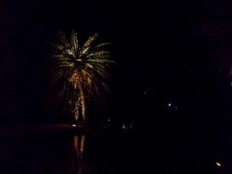 palm tree lit up at night