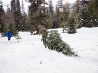 Ken hauls our tree down the hill. Don and Mary already had theirs.
