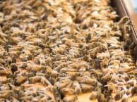 New bees still in their cardboard box