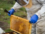 The hive that died had plenty of honey so it wasn't for lack of food.