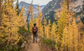 The golden larch season is fleeting. It's best to enjoy it while we can.