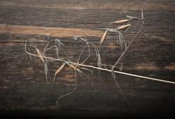 last year's grasses