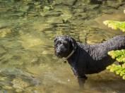 Luna enjoys the water, calmly