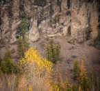 Peregrine Falcons and Canyon Wrens nest in these cliffs