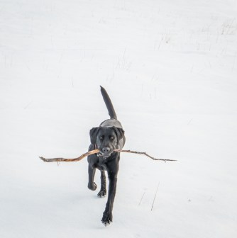 Oh look, Sky found a stick.