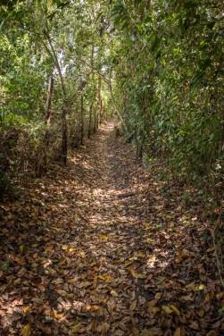 A trail near the lodge