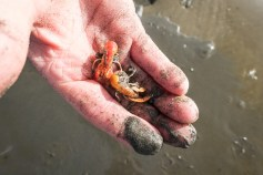 Sand shrimp make good fish bait but first you have to catch them.