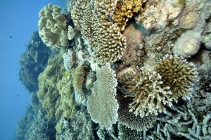 Great Barriee Reef