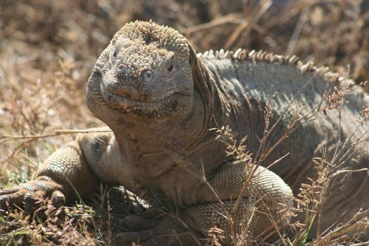 Galapogos Islands