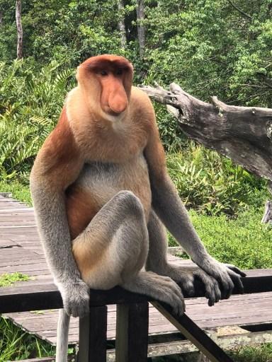 Labok Bay Proboscis Monkey Reserve