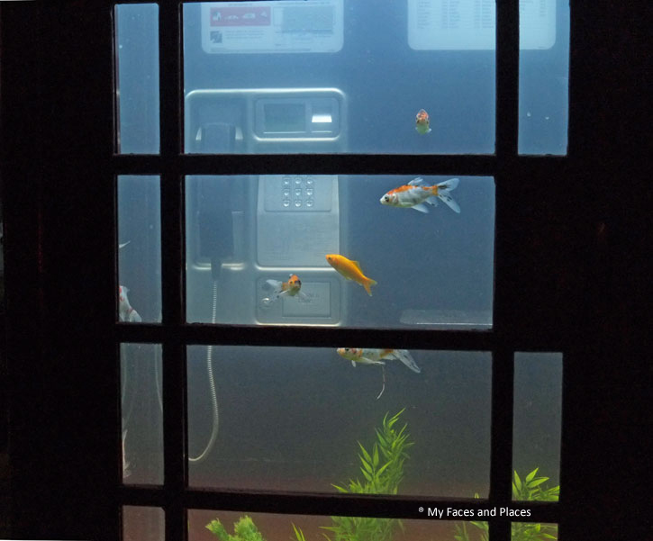20 Aquarium - Probably the most interesting of the London Lumiere. A live fish tank in the iconic London Telephone box.