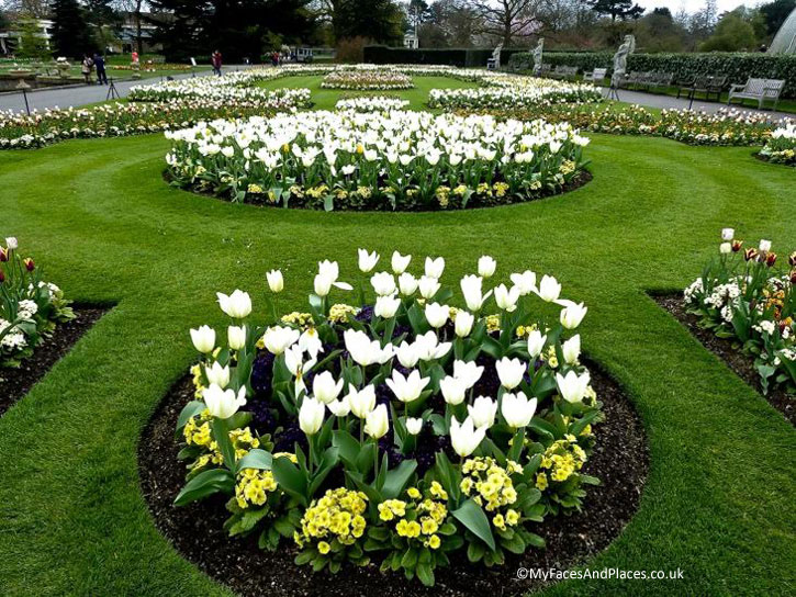 A parterre of tulips in Kew Gardens.
