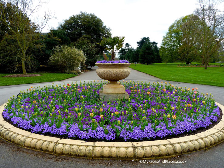Tulips and hyacinths in princely purple in Kew Gardens.
