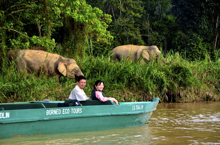 Albert and his wife Catherine photo bombed by Bornean pygmy elephants on a river safari on the Kinabatangan River. Albert Teo - A Man With A Green Mission