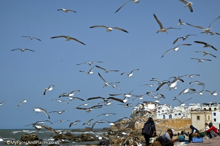 The bustling fishing port that attracts hundreds of seagulls on market day
