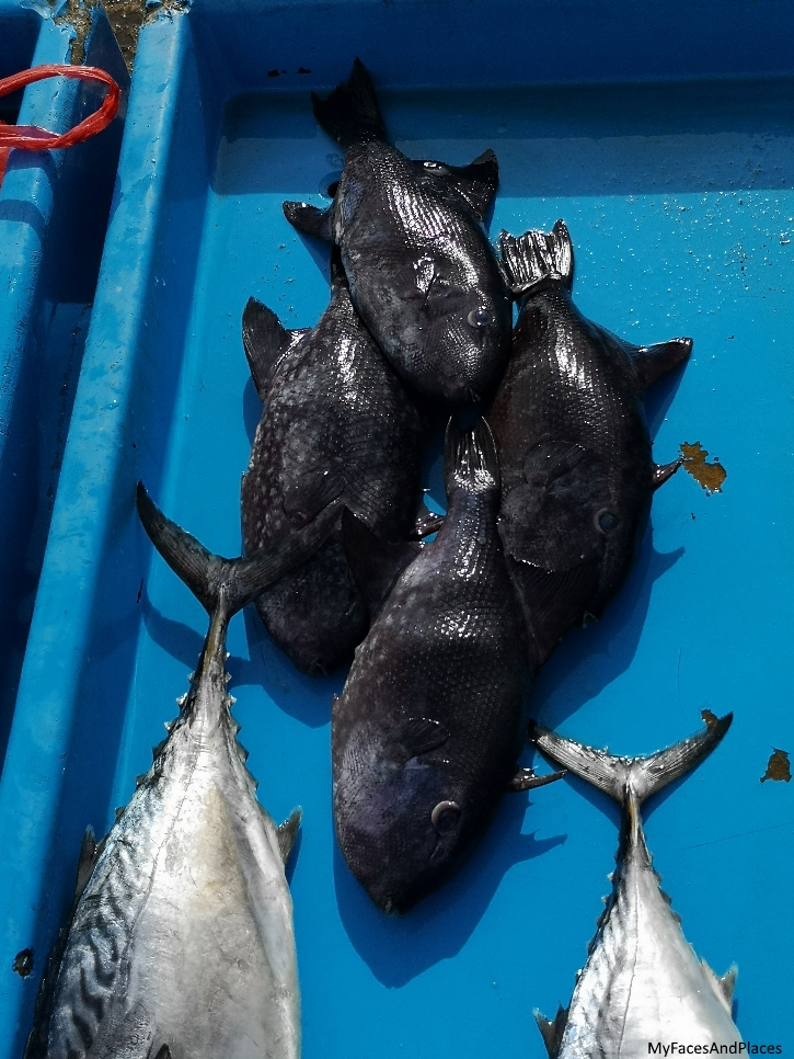 """Chicken Fish"" catch of the day at the fish market"